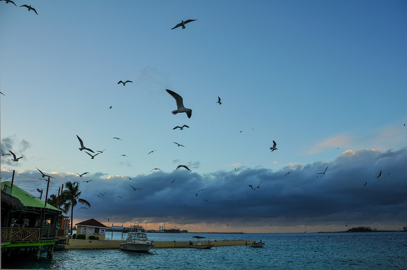 Seagulls near Senor Frogs, Nassau, Bahamas - February 2011