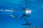 Jim Abernethy takes photos of wild dolphins while scooting around