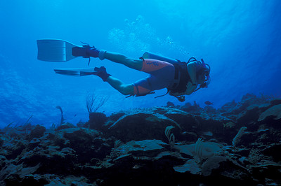 © Joseph Dougherty. All rights reserved.  Wall diving on Eleuthera, eastern Bahamas.