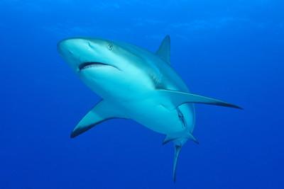 Bahamas Underwater
