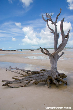 Nature made tree sculpture on beach
