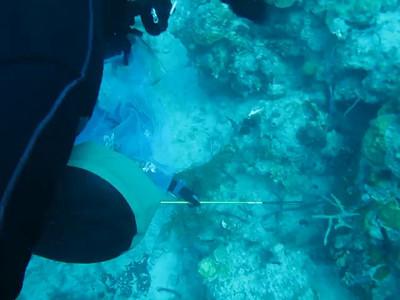 Lionfish Hunt 2011