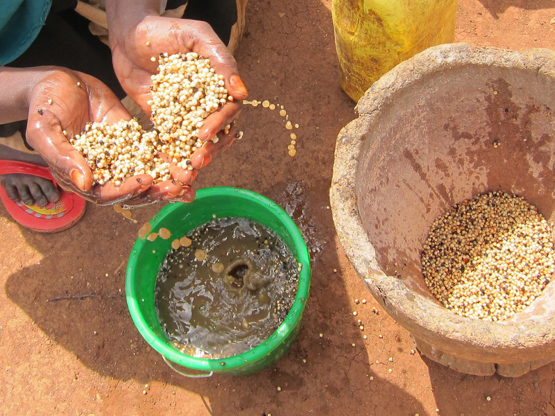 Preparing sorghum for grinding