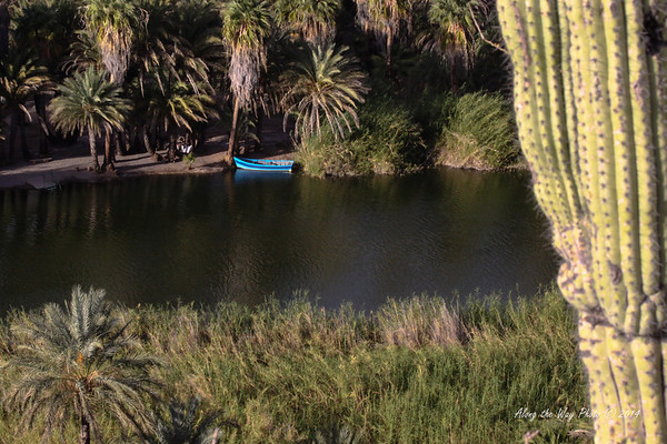 San Ignacio 5539<br /> Boat docked on river just down from San Ignacio in Baja California.