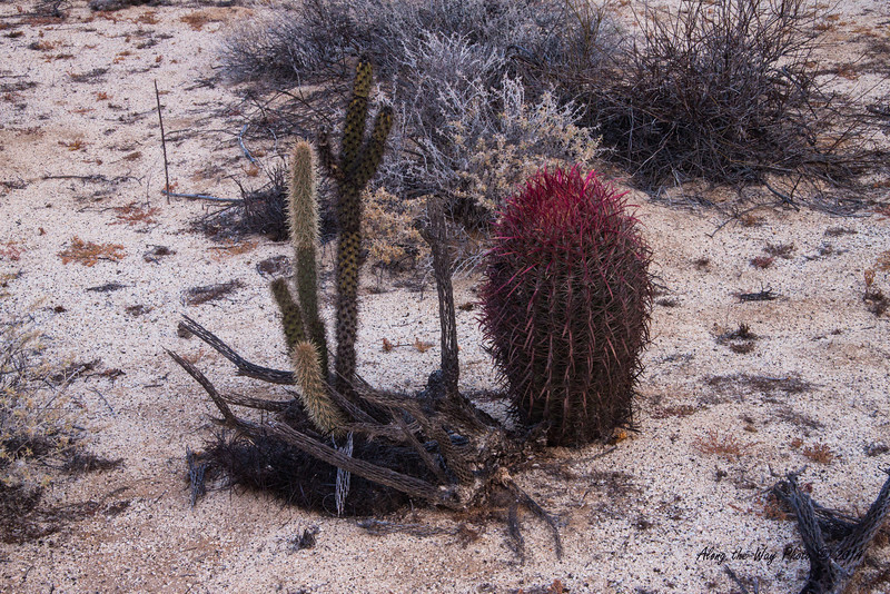 Catavina 4268<br /> Barrel Cactus in the Central Desert in the Baja Peninsula.