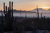 Catavina 4238<br /> Sun rise with the ground fog raising off of the Central desert in the Baja Peninsula.