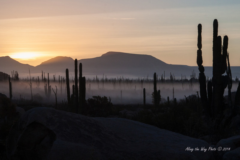 Catavina 4241<br /> Sun rise with the ground fog raising off of the Central desert in the Baja Peninsula.