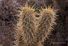 Catavina 5651<br /> Cactus growing in the Central Desert in Baja California just outside of Catavina.
