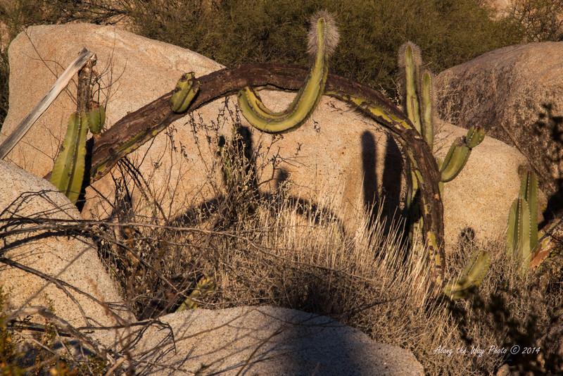 Catavina 4204<br /> Cactus in the Central Desert in the Baja Peninsula.