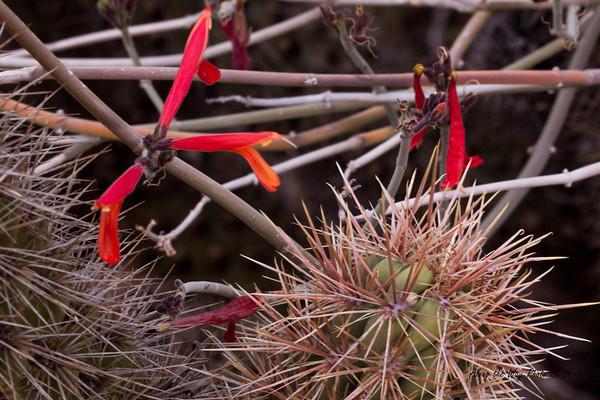 Catavina 5668<br /> Cactus in the Central Desert in Baja California, just outside of Catavina.