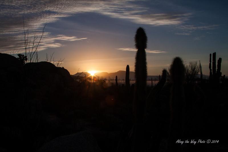 Catavina 4245<br /> Sunrise in the Catavina Boulder fields with Cardon Cactus in the Central Desert in the Baja Peninsula.