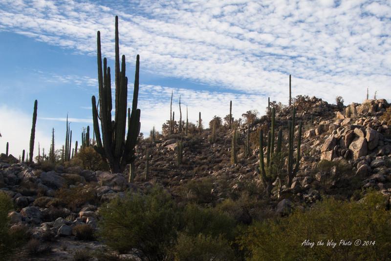 Catavina 4298<br /> Cactus in the Catavina Boulder fields in the Central Desert in the Baja Peninsula.