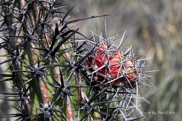 Catavina 4446<br /> Cactus in the Central Desert in the Baja Peninsula.