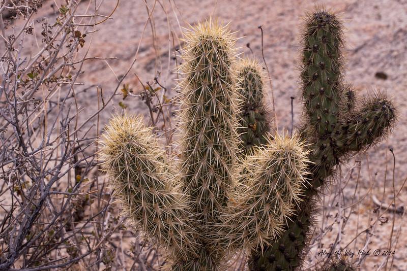 Catavina 5651<br /> Cactus growing in the Central Desert in Baja California just outside of Catavina.