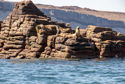 Sea lions on an interesting geologic formation.