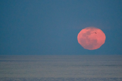 Rise of the full moon over the Sea of Cortes.