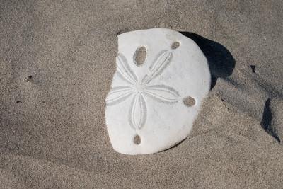 At Sanddollar Beach on Magdalena Bay.