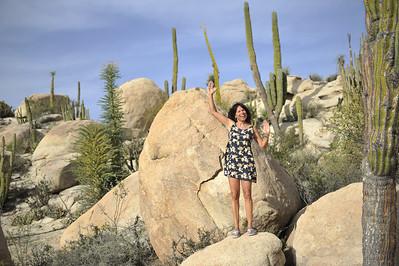 welche Kaktusart ist denn das? ganz deutlich ein blühender Kaktus!