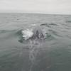 1. Whale watching in Guerrero Negro in der Laguna Ojo de Liebre
