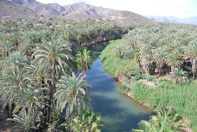 the palm orchard in Mulege