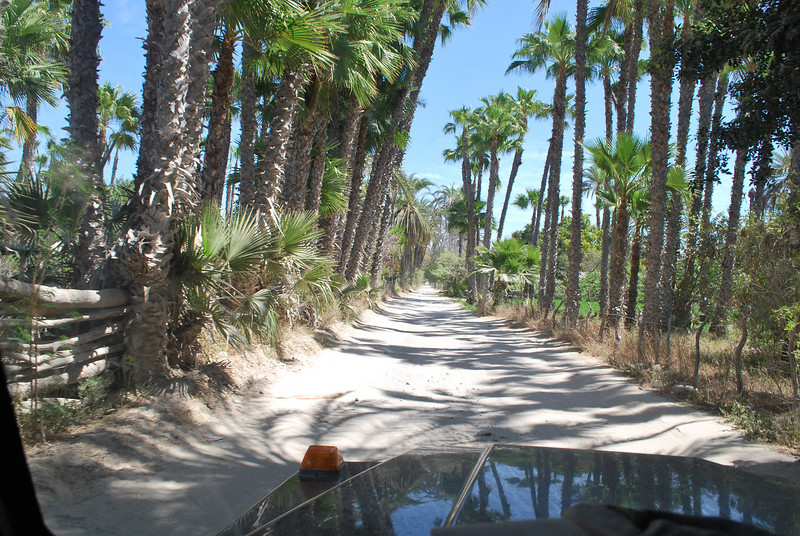 driving through the palm gardens of La Purisima