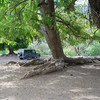 parking under giant Guanacaste tree