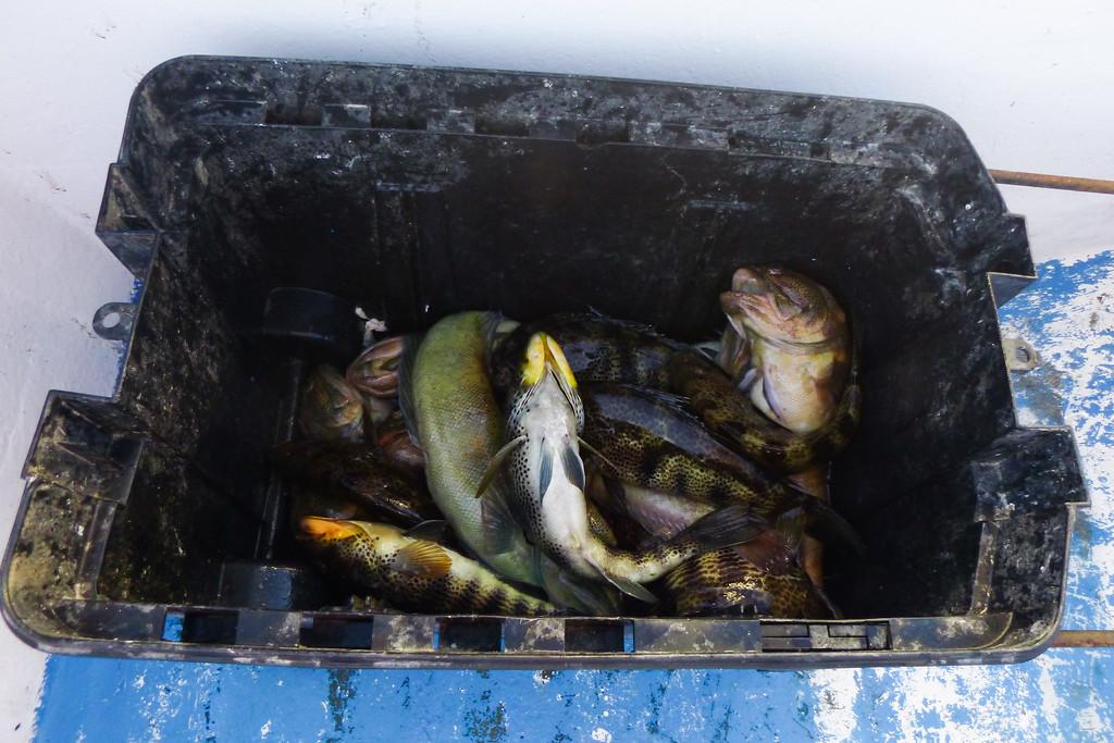 Today's Catch