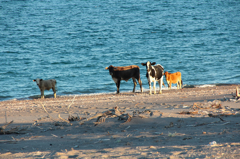 """we called the first cam """"Campo Vaccas"""" for the cows that visited us at sunset"""