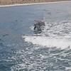Las Animas Dolphin magic2