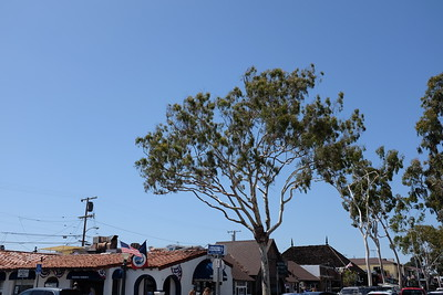 Balboa Tree