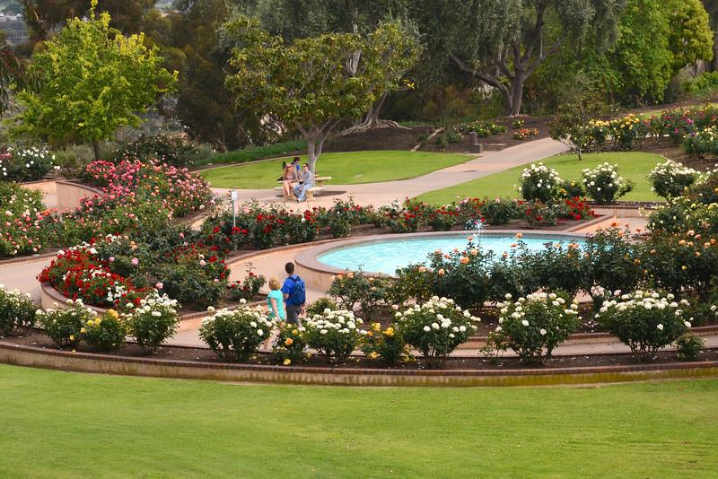 Springtime at the Rose Garden in Balboa Park.