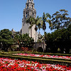 The California tower and springtime flower beds at Balboa Park, in San Diego.