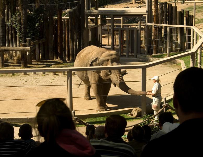 Feeding the elephant at the San Diego Wild Animal Park.