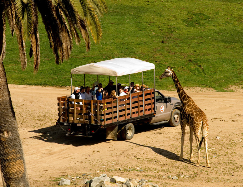 Visitors get close to the animals on a photo caravan safari at the San Diego Wild Animal Park.