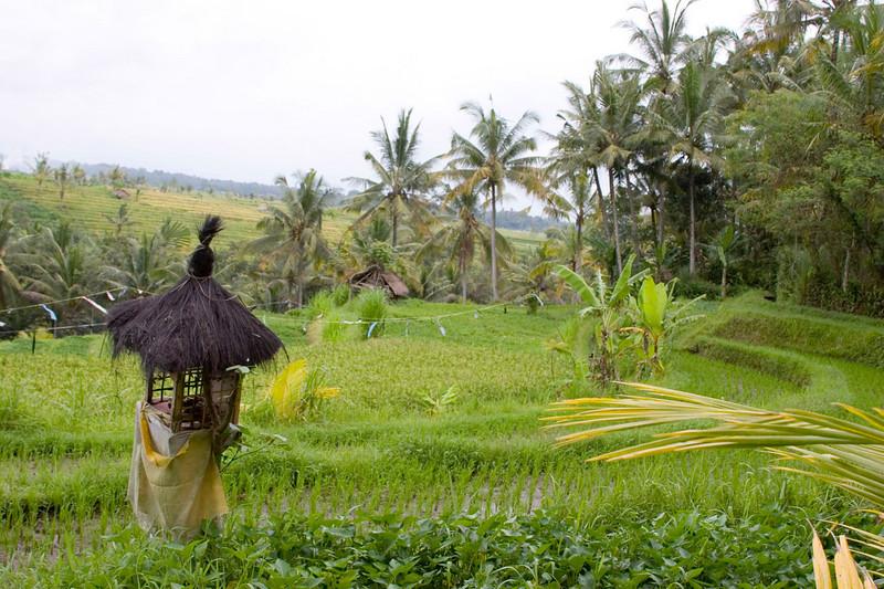Every rice paddy has a Hindu shrine