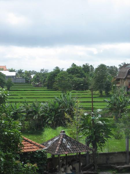 Endless terraced rice fields.