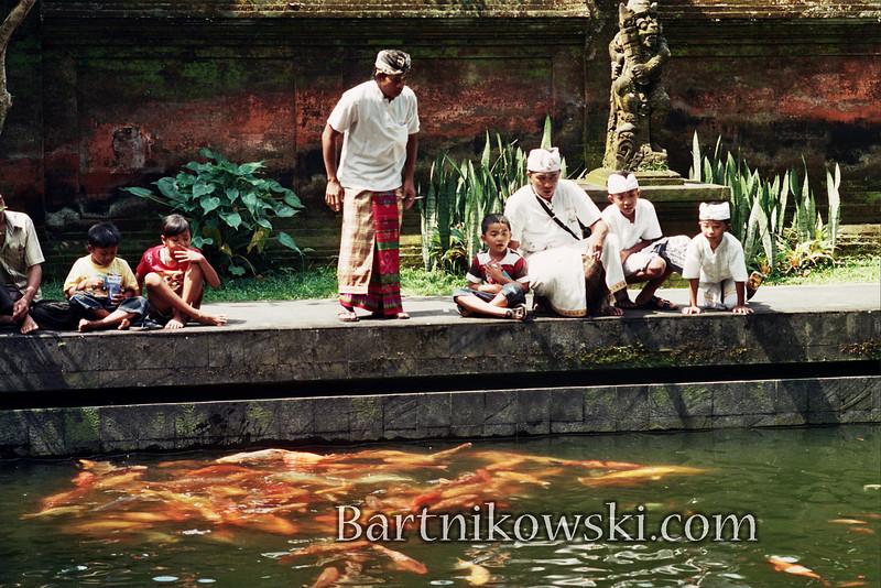 Koi Fish at Water Temple, Bali