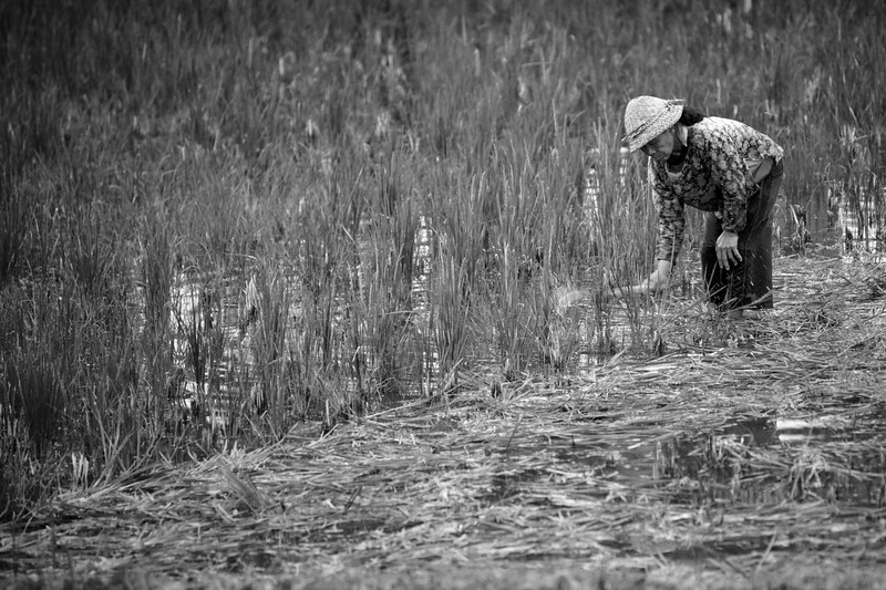 A worker in the rice fields at our hotel in Ubud.