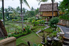 The grounds of our accomodation in Ubud.