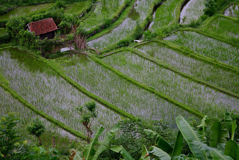 Ancient rice terraces near Tirta Gangga, eastern Bali.