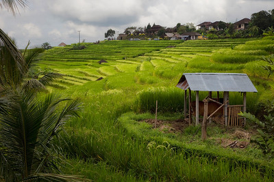 Banaue Rice Fields, a UNESCO World Heritage Site