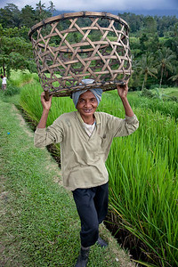 Woman with basket at Banaue Rice Fields, a UNESCO World Heritage Site