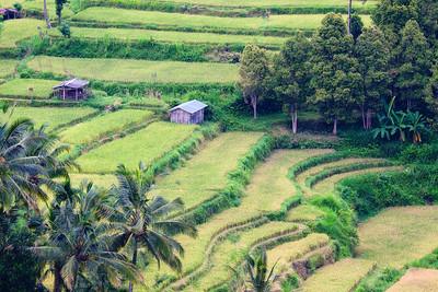 Rice Fields near Mt Agung