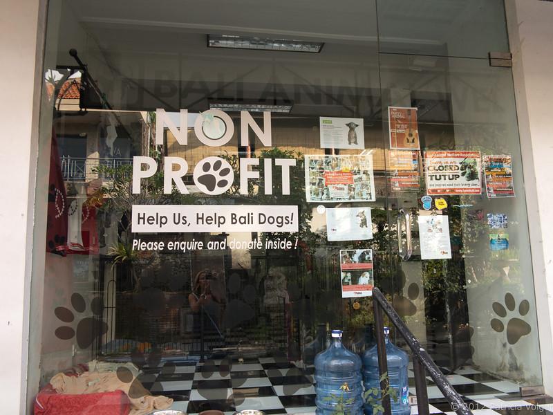 sreet dog non profit, Ubud, Bali
