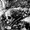 Bali Skulls 6