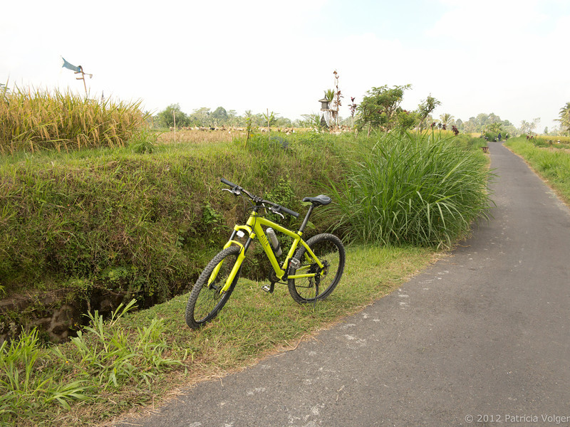 took one of the hotel bikes and went on a little bike ride through the local villages surrounding Ubud