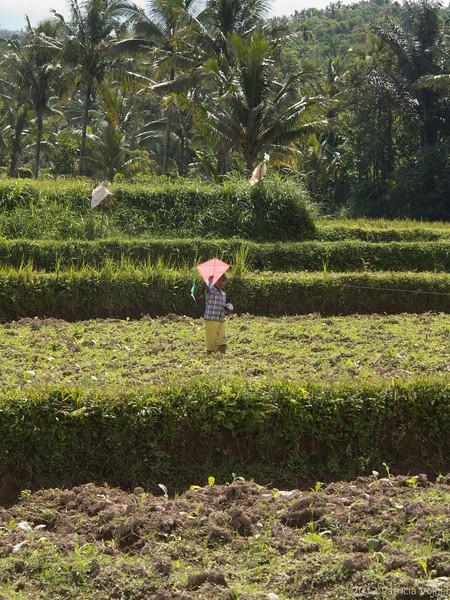 rice field walk, Lombok, Indonesia