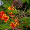 More hibiscus