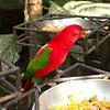 Bali Bird Park