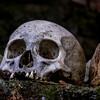 Bali Skulls 5